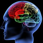Revoluciona tu manera de entender las presentaciones: Neuromarketing aplicado a la Oratoria